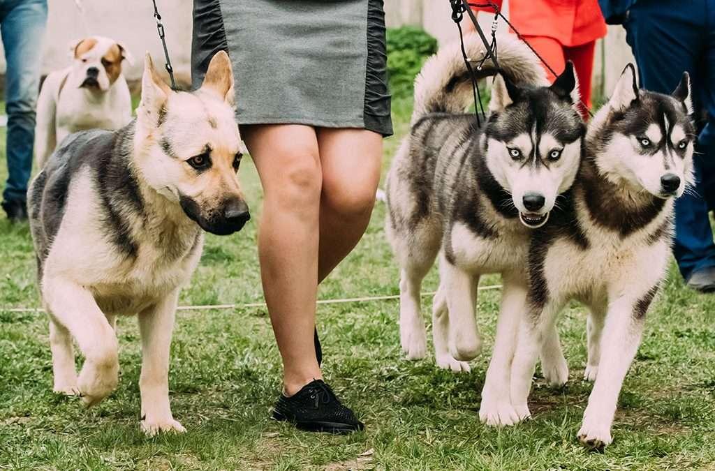 £11,000 for dog bite victim